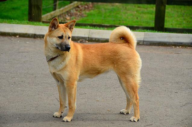 Découvrez Jindo, l'île communément associée au chien du même nom